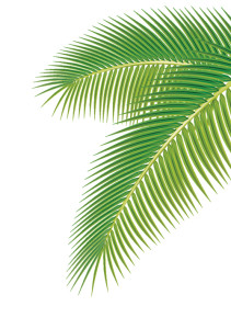 Palm-leaves-1